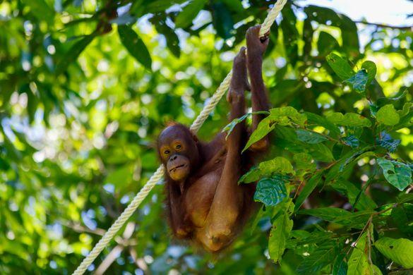 Number 5 - Sepilok Orangutan Rehab Center.jpg